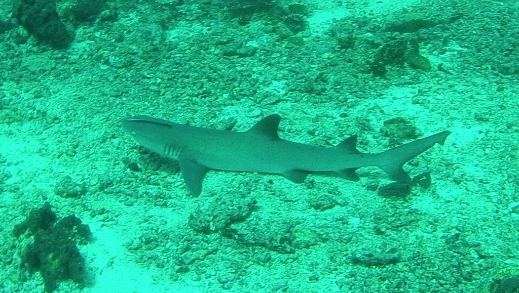 lots of reef sharks here, not at all dangerous