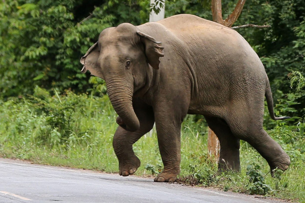 this is not the elephant we saw :0)