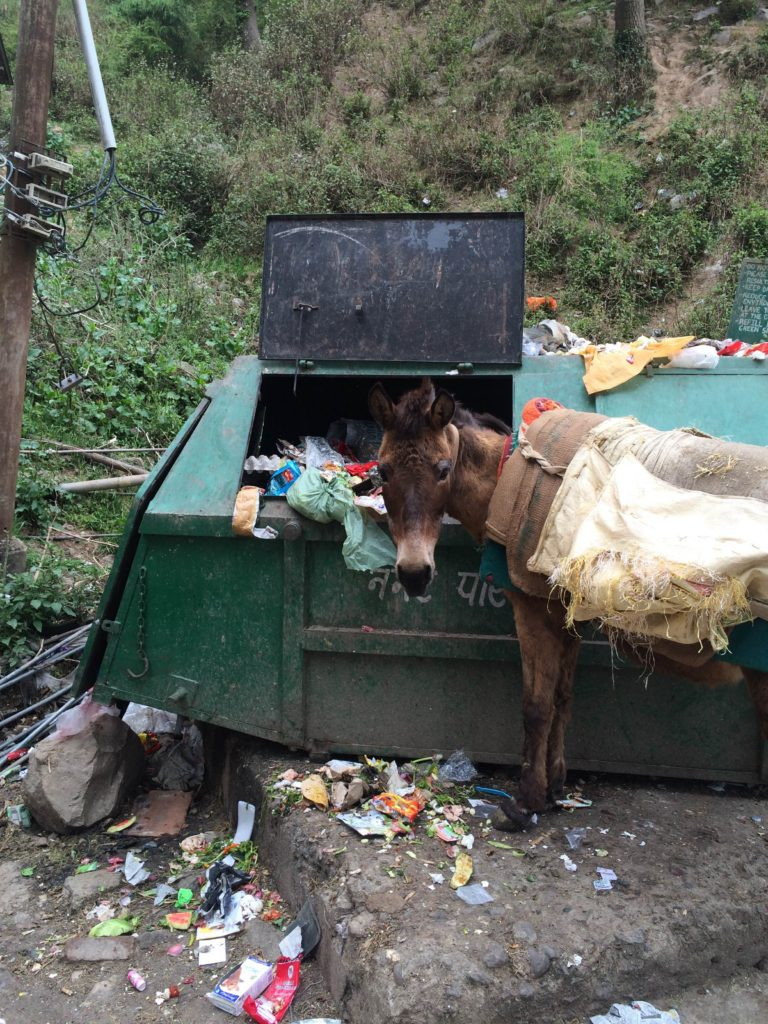 A cute donkey busted in the bin