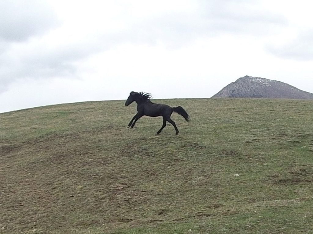 A horse running freely